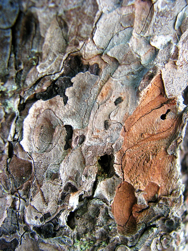 A July Day 048cool bark