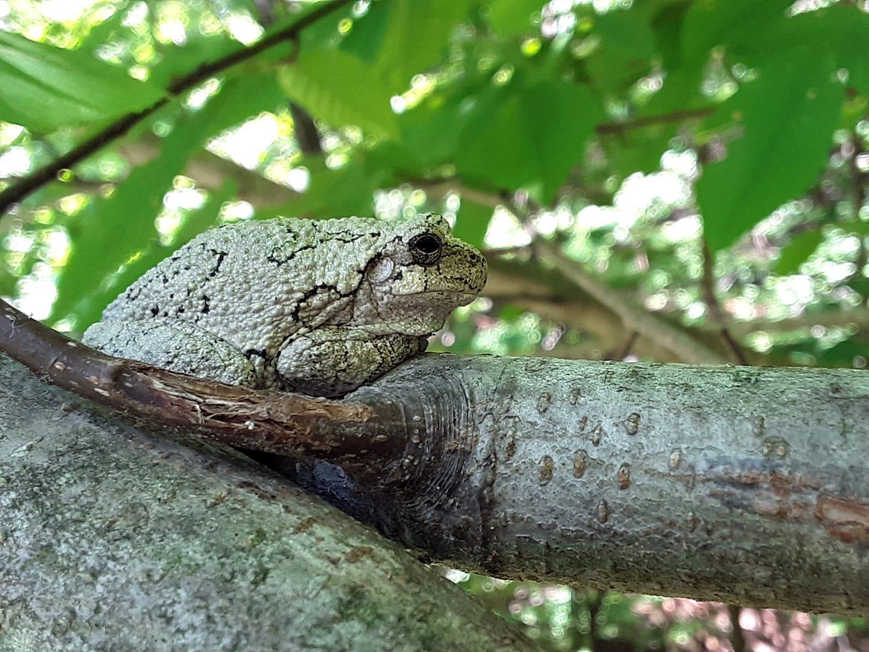Sillyfrog's Blog